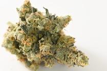 Chunk D Marijuana Denver
