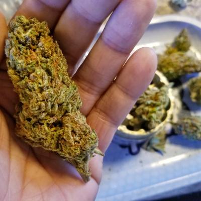 Arizona bud 2
