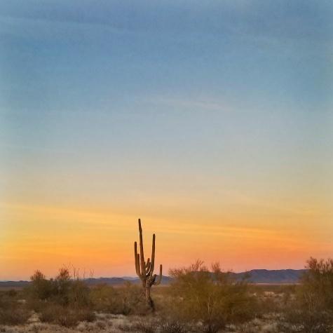 Arizona sunset with cactus