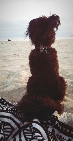 Booger on the beach 2