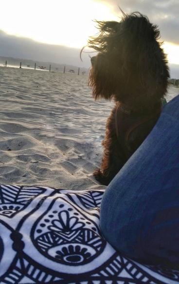 Booger on the beach