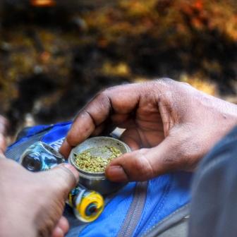 Cannabis in the Tijera Mountains