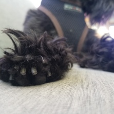 PMo's new nail trim