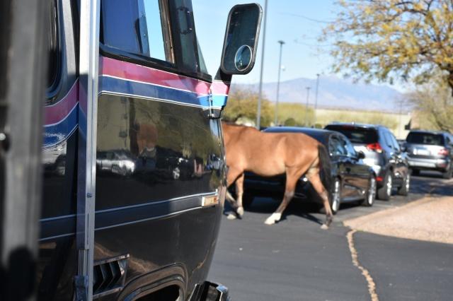 Wild horses vanabus